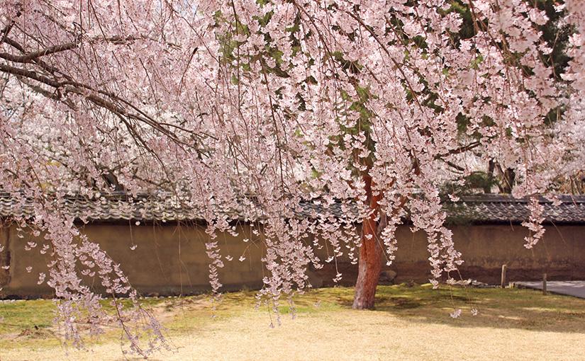 【京都】アロマハンドトリートメント初級・中級講座のご案内